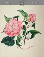 Rysunek z kwiatami